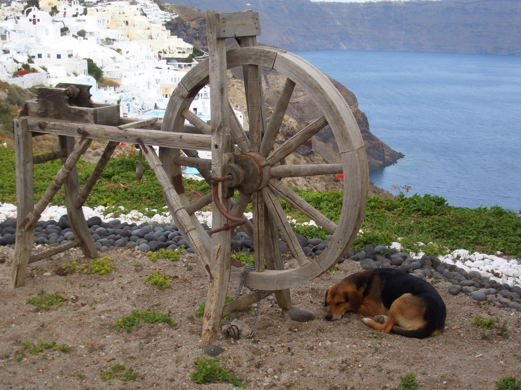 wish i were a santorini dog